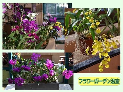 flower_onshitsu.jpg